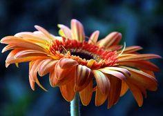 flower eye level - Google Search