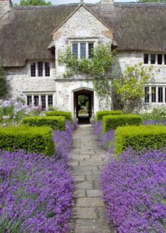 thatchet-roof cottage with lavender-bordered walk