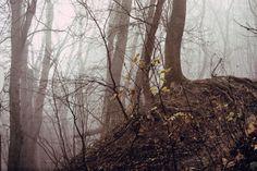 ködfás