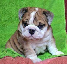 love the wrinkles! so cute!!