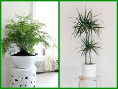 14 pokojových rostlin do stínu a polostínu My New Room, House Plants, Flowers, Gardening, Indoor House Plants, Lawn And Garden, Foliage Plants, Houseplants, Royal Icing Flowers