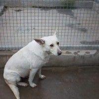 #dogalize Appello per adozione: Charlotte cerca casa! #dogs #cats #pets
