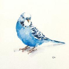 Budgerigar Parakeet Original Watercolor Blue by CMwatercolors