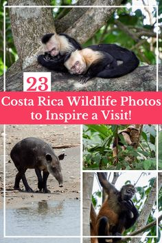 23 Costa Rica Wildlife Photos to Make You Want to Visit Right Now   Travel Costa Rica   Wildlife Photography