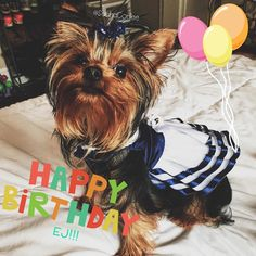 Humph! Mummy is being a slowpoke and I'm trying to rush around so I'm not late to my best bud @ej_the_yorkie #EJsBarkDayBash - it's gonna be awesome! I've got balloons and my twinsie pawty dress (@miraclepebbles and I thought we should match since we are besties!) and I heard there may even be cake! So put on your best pawty attire (or come in your birthday suit ) and let's let EJ feel the love on his big day!! I love you EJ!  . . Please check out my pawtners tagged! They're the best…