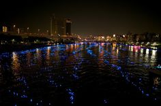 fireflies?  not quite! 100,000 LED lights floating down the Sumida River... the beautiful Tokyo Hotaru Festival - photo by JeremyV (2)