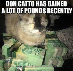 Free tarot decks tarot meme memes tarot card laughs httpsjohnnybetbetrally bonus referrer sciox Image collections
