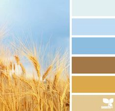 Color Field by Design Seeds