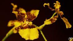 Orchidee_6 | Flickr: partage de photos!