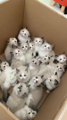 Funny Cute Cats, Cute Cats And Kittens, Cute Funny Animals, Kittens Cutest, Cats In Love, Super Cute Kittens, Cute Cat Memes, Funny Kittens, Silly Cats