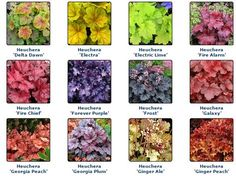 Outdoor Landscaping, Front Yard Landscaping, Coral Bells Heuchera, Shade Garden Plants, Low Light Plants, Woodland Garden, Garden Landscape Design, Foliage Plants, Trees And Shrubs