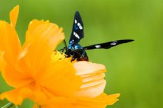 Butterfly | Nature BloggerNature Blogger