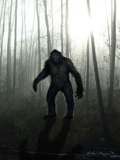 Many Bigfoot sightings are a complete surprise both to the eyewitness and to the Bigfoot just like in this BFRO report Report # 34485  (Class A)  RobRoy Menzies captures this in classic form and detail! Visit our store for this and other great works of art on our wonderful product line! http://www.cafepress.com/cryptoaddicts2