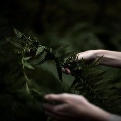 In the woods The Ancient Magus Bride, Slytherin Aesthetic, The Villain, Dragon Age, Character Inspiration, The Darkest, Fairy Tales, Fantasy, World