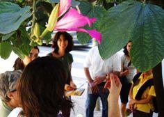 O Instituto Árvores Vivas, que visa orientar e divulgar informações e curiosidades sobre as árvores na cidade de São Paulo criou a 1ª Semana cultural das árvores, evento que acontece de 21 a 26 de setembro, no Parque da Luz, na Praça do Ciclista e na Vila Madalena, com entrada Catraca Livre.