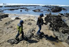 Half Moon Bay with Kids: Close Encounters of the Coastal Kind Free Activities For Kids, Nature Activities, Travel With Kids, Family Travel, Amazing Destinations, Travel Destinations, Half Moon Bay Camping, Camping Shelters, San Mateo County