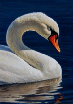 Reflection - mute swan 7x5, painting by artist George Lockwood