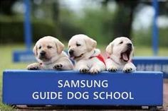 Samsung Guide Dog Pups