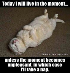 Today I will live in the moment. Unless the moment becomes unpleasant, in which case I'll take a nap. Funny Cat Fails, Funny Cat Videos, Funny Cat Pictures, Funny Cats, Funny Memes, Funny Quotes, Like Animals, Funny Animals, Animal Funnies
