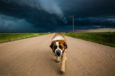 The Storm Dog - This big guy had so much fun jumping in the puddles and slobbering all over my camera gear. http://ift.tt/2gksRPb