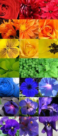 Rainbow Flowers | Imogen's Notebook: Rainbow Coloured Flowers