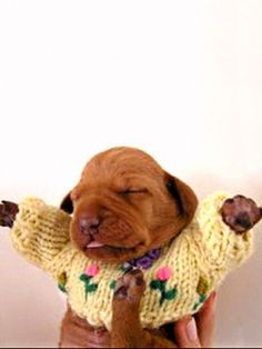animals in sweater - Google Search