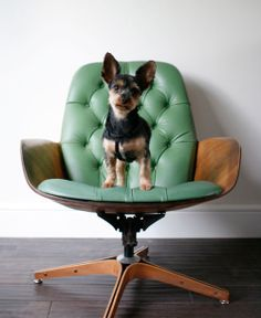 teal plycraft chair