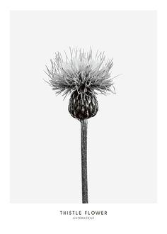Poster mit botanischem Motiv in Schwarz-Weiß.