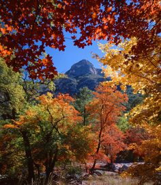 Autumn foliage frames a peak in Guadalupe Mountains National Park, TX by Richard Reynolds on Guadalupe Mountains National Park, Fall Pictures, Beautiful Landscapes, National Parks, Beautiful Places, Art Prints, Frames, Trips, Bright