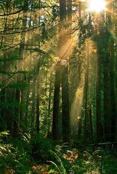 Sunbeams, Willamette National Forest, Oregon photo via tearing ~~Sunbeams through the trees.~~
