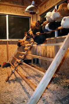 Roosting bars are where your chickens should perch to sleep at night inside their coop.