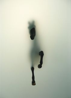 "Saatchi Online Artist: Miriam Sweeney; Giclée, 2009, Photography ""Subversion"""