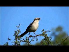 El Divo, Singing, Creatures, Youtube, Bird, Marcel, Animals, Videos, Christmas