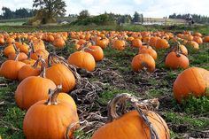 Fall in Colorado: Pumpkin Patches, Corn Mazes, & Hay Rides - The Dime | Cents & Sensibility