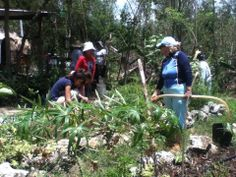 Promueven la agricultura orgánica en Cancún