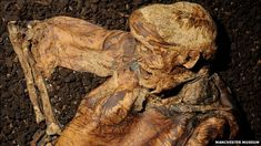Thirty years ago, a peat cutter working in the Cheshire countryside spotted what he thought was a piece of wood trundling along a conveyor belt.  Tasked with the job of keeping the belt free of debris, he threw it away, but as it hit the ground, the dirt fell from it and the remains of a human leg lay in the summer sun.