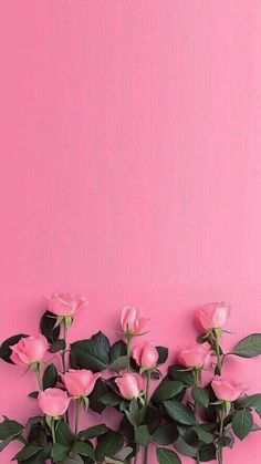 48 Ideas for flowers pink wallpaper pretty wall papers Floral Wallpaper Phone, Pink Wallpaper Backgrounds, Flower Background Wallpaper, Rose Wallpaper, Flower Backgrounds, Cellphone Wallpaper, Aesthetic Iphone Wallpaper, Backgrounds Free, Aesthetic Backgrounds