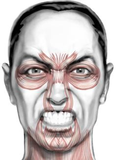draw facial expression Anger - Every human being has the ability to communicate with a range of expressions no other creature can match. Facial Anatomy, Head Anatomy, Human Body Anatomy, Facial Action Coding System, Human Face Sketch, Facial Expressions Drawing, Facial Aesthetics, Cosmetic Treatments, Dibujo