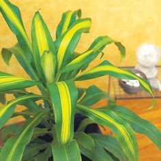 24 of the easiest houseplants to grow.