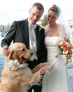 Google Image Result for http://www.mydogcollars.com/product_images/import/manufacturers/up-country/wedding/wedding.jpg