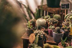 Cactus & Suculents