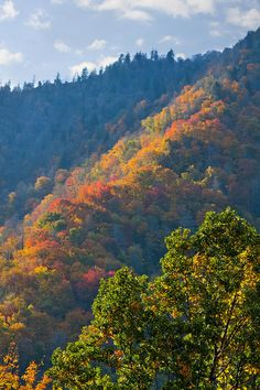 Great Smoky Mountains--I've actually been there one summer long ago, and want to go in the fall as shown here.