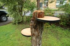 Stumped? it costs 100's to have a stump removed or ground out,, why not try this lol could even put a table top on it for a cool  table.