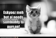 need hartbeat an warmz Cute Cat Memes, Cute Animal Memes, Animal Jokes, Cute Funny Animals, Cute Baby Animals, Silly Cats, Cute Cats And Kittens, Crazy Cats, Kittens Cutest