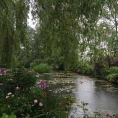 nature, garden, water, plants, lake, river, planty river
