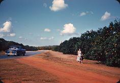 Florida Oranges - 1957 | by ElectroSpark