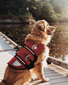 Adorable Dogs, Adorable Animals, Psychiatric Service Dog, What A Beautiful World, Guide Dog, Golden Retrievers, Service Dogs, Family Kids, Dog Photos