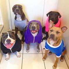 Pitbull Party Premium Girlie  Schwarz Dog Fun