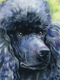 BLACK POODLE Dog Watercolor Art Print Signed by by k9artgallery, $12.50