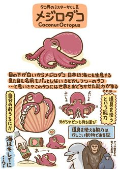 t marohiko no 008 225180050104223147 Cute Animals Weird Creatures, Sea Creatures, Cute Illustration, Graphic Design Illustration, Animal Drawings, Cute Drawings, Coconut Octopus, Animals And Pets, Cute Animals